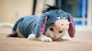 in costumes 50 best cats dressed up ideas kittens in costumes
