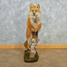 Taxidermy Fox Meme - red fox standing mount for sale 12676 the taxidermy store