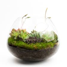 big ol u0027 dollop diy succulent terrarium kit juicykits com