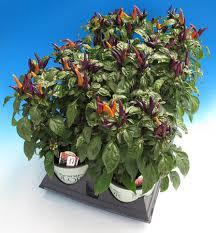 wenke greenhouses photo gallery 1 gal plants that work 1
