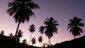 Palm Tree Wallpaper Finish Each Day And Be Done With U Have Done What You Could Hd