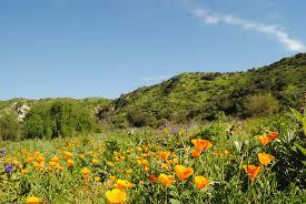 native plants in southern california irvine ranch conservancy landmarks blog