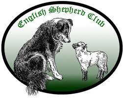 australian shepherd vs english shepherd registration english shepherd club