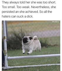 Tgif Meme - tgif meme dump 50 mohstly fresh album on imgur funny memes