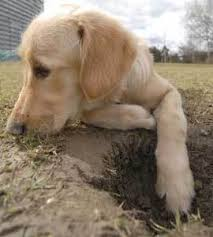 training a dog to stop digging thriftyfun