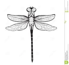 dragonfly insect black inky drawing download from over 29