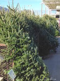 botanic bleu live christmas tree buying tips