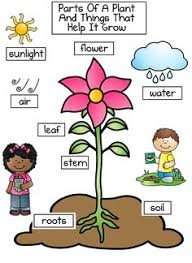 children can label the parts of a plant from super teacher