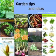 Garden Tips And Ideas Garden Tips And Ideas Jpg