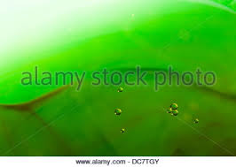 abstract background using food coloring and oil in a glass bowl