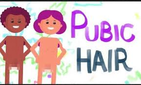 shave pubic hair video here s why you should never shave your pubic hair great