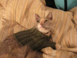 sweaters for cats sweater for a toasty cat knitting