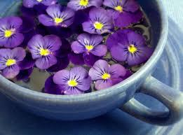 fiori viola febbraio violetto fito