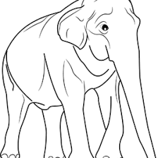 asian elephant coloring archives mente beta complete