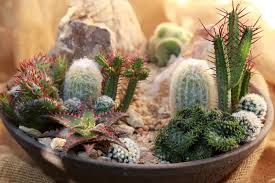make a mini high desert succulent garden youtube