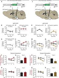 gating of social reward by oxytocin in the ventral tegmental area