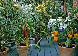 Patio Vegetable Garden Ideas Urban Vegetable Gardening U2013 Exhort Me
