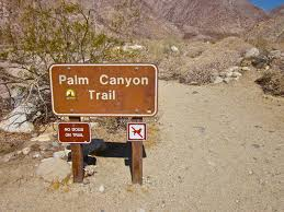 borrego palm canyon trail anza borrego sp u2013 one cool thing every