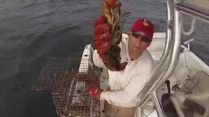 recreational lobstering on cape cod bay youtube