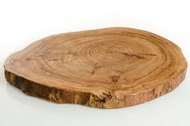 tree cross section table slice elm tree cross section stock image image of grain macro