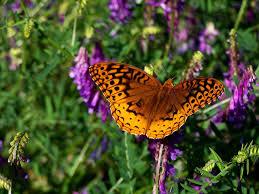butterflies wallpapers circles flowers art butterfly image