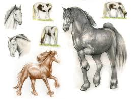 horse sketches by feathergale on deviantart