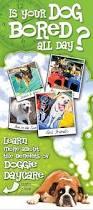 best 25 pet daycare ideas on pinterest dog boarding kennels