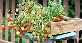 top 10 different cousin vegetable grow in pot top 10 plants