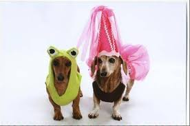 Halloween Costumes Miniature Dachshunds Images Halloween Pet Costume Contest
