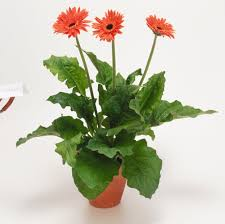 plants for the house top plants for reducing indoor air pollution all are equal