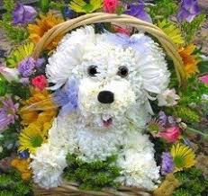 dog flower arrangement dog floral arrangement tickets sat apr 21 2018 at 10 00 am