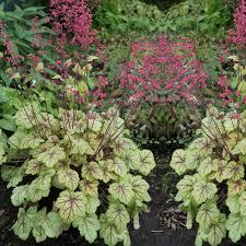 plante vivace soleil plante vivace pas cher acheter plante pérenne en ligne jardin