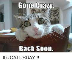 Caturday Meme - gone crazy back soon it s caturday caturday meme on