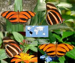 id guide orange butterflies exhibits