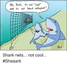 Heidi Meme - no heidi its not cool and its not teach volleyball phil shark nets