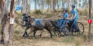 jumps west horse jumps dressage barn equipment