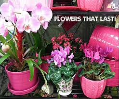 a flower you shouldn t valentines seven reasons you shouldn t buy cut flowers south