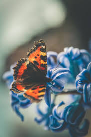 46 best ξжз فراشة butterfly ξжз images on pinterest beautiful