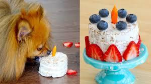 how to make a birthday cake for dogs paddington u0027s pantry