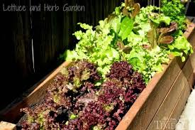side yard vegetable garden small space solutions mom on timeout