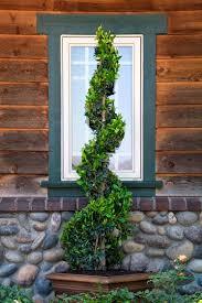 shrubs you ll topiaries for shape monrovia