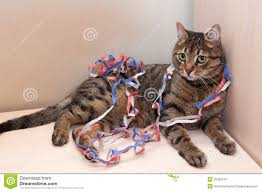 tabby cat lies coiled serpentine christmas decorations stock