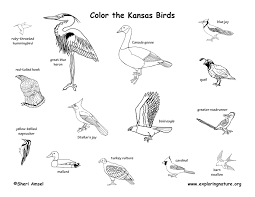 Kansas Birds images Kansas habitats mammals birds amphibians reptiles jpg