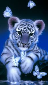 183 best cats images on pinterest cats animals and big cats