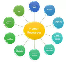 profile of hr manager what is the role of a hr in a company quora