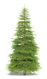 real christmas trees the city of calgary how to compost real christmas trees