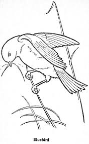 93 best coloring pages birds u0026 bees images on pinterest