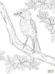 realistic florida scrub jay coloring page free printable