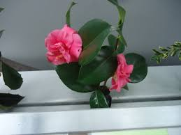 7 great plants for the winter garden that bloomin u0027 garden