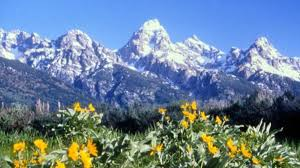 Wyoming national parks images Grand teton national park moose travel wyoming that 39 s wy jpg